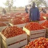 Dai pomodori...alla passata di pomodoro